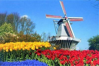 """Результат пошуку зображень за запитом """"нідерланди"""""""